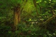woud mooi