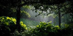 woud reen