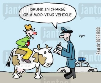 Drunk in charge of a moo-ving vehicle.