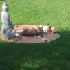 Poppie-Lief wat in die middel van die tuin haar tuismaak...