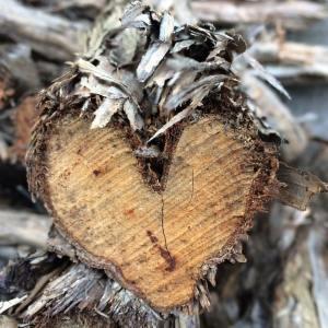 heart woord